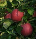 Pick Your Own Fruit 2021 Updates
